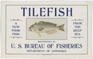 A poster distributed to fishmongers and supermarkets by the USBF to advertise Tilefish. Government Printing Office, 1916.