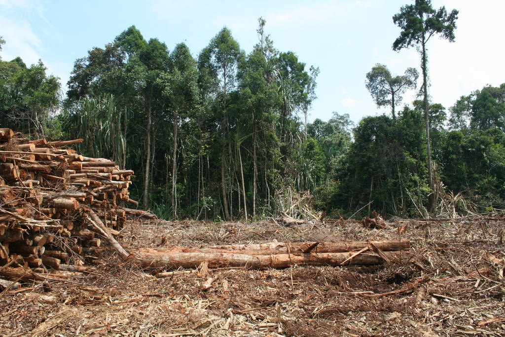 """An example of the devastation of Indonesia's rainforest that occurs when trees are harvested for export, July 2009. Image by Rainforest Action Network via <a href=""""https://www.flickr.com/photos/rainforestactionnetwork/5680744399#"""" target=""""_blank"""">Flickr</a>."""