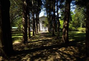 Trees cast shadows on the stone path leading to Rowan Oak, home to enslaver Robert Sheegog at the time of the founding of the University of Mississippi (Ole Miss). Photo by Visit Mississippi, 2005.