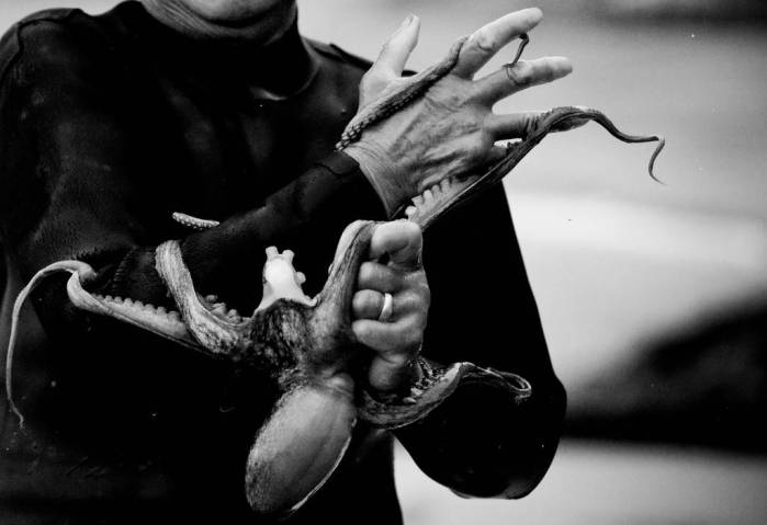 A haenyeo diver removes an octopus from her arm. Photo by Brian Miller, November 2007.