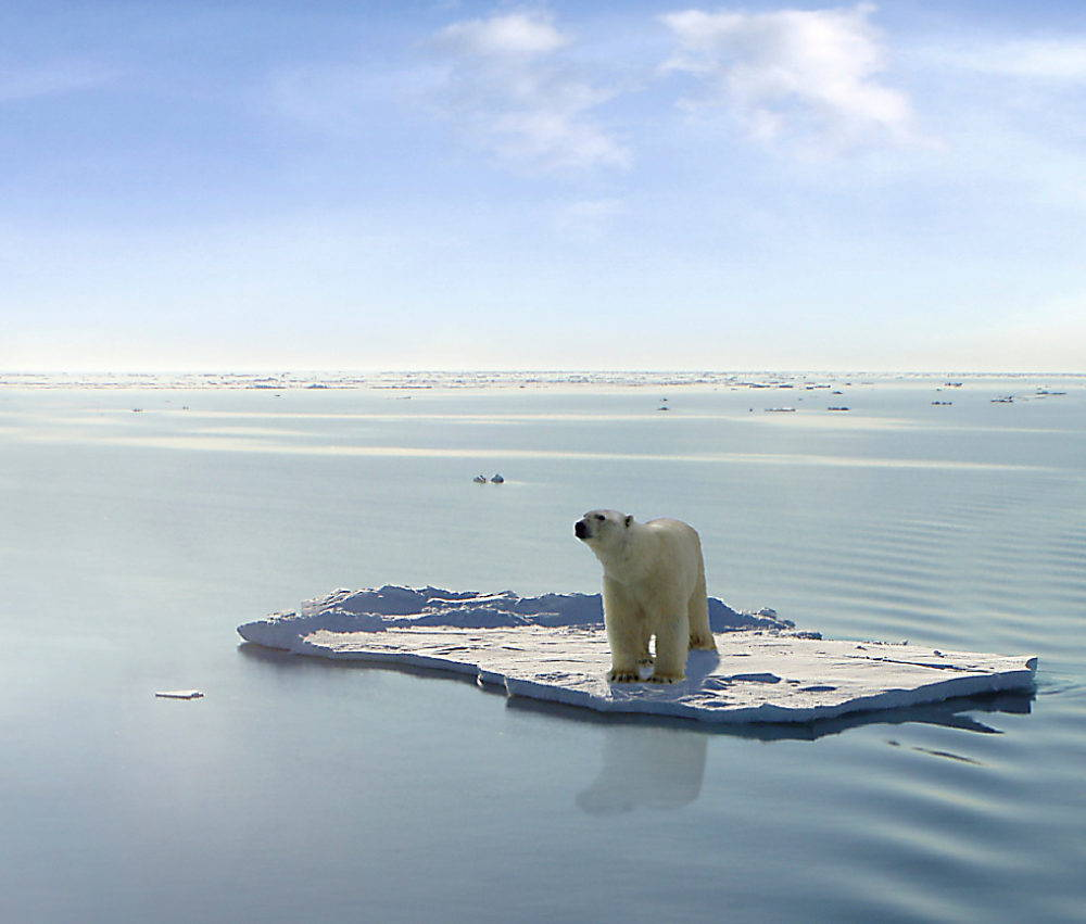 """In a popular image of """"decline"""" and """"loss,"""" an endangered polar bear floats on a diminishing ice floe in the Arctic sea. Photograph by Gerard Van der Leun."""