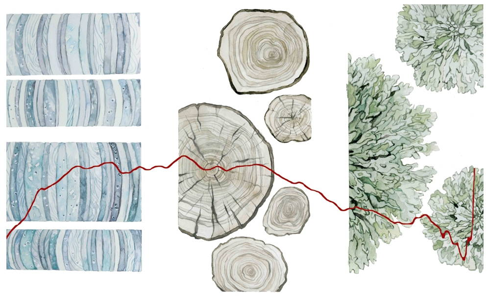 Jill Pelto illustrations of a red line graph superimposed over illustrations of (left to right) ice corps, cross sections of trees, and green lichens.