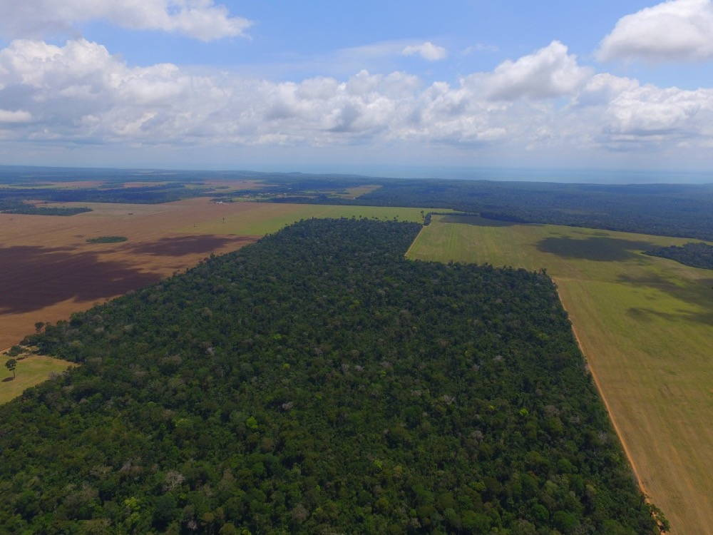Deforestation. Trees surrounded by tilled fields.