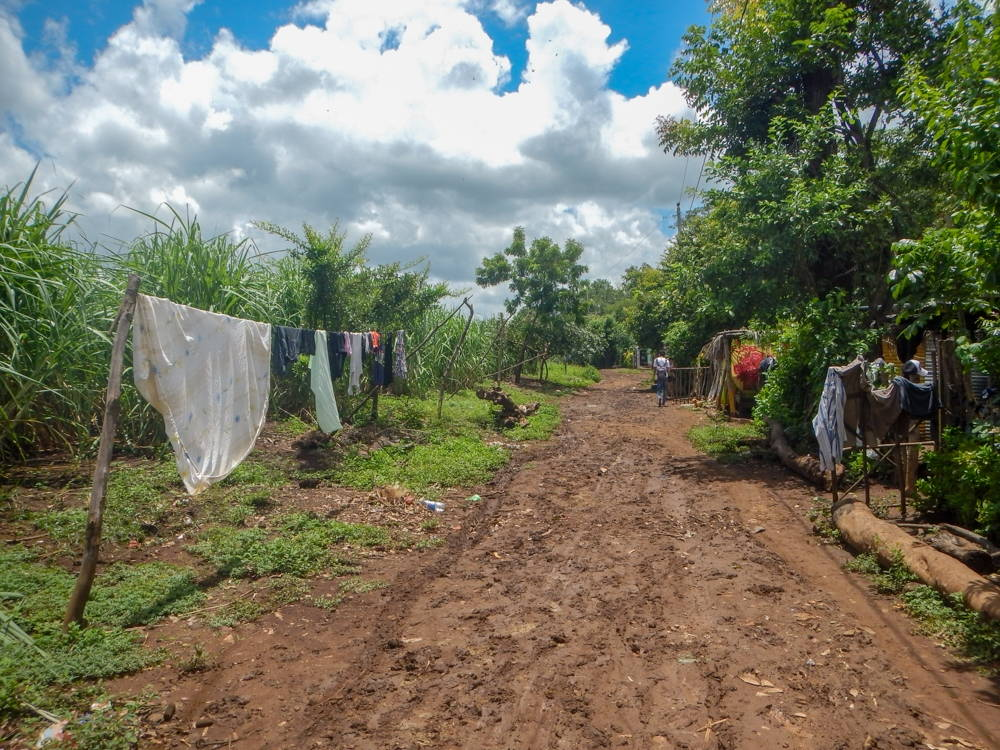 Drying laundry hangs along the edge of a dirt road. People's houses are built right next to the sugarcane fields.