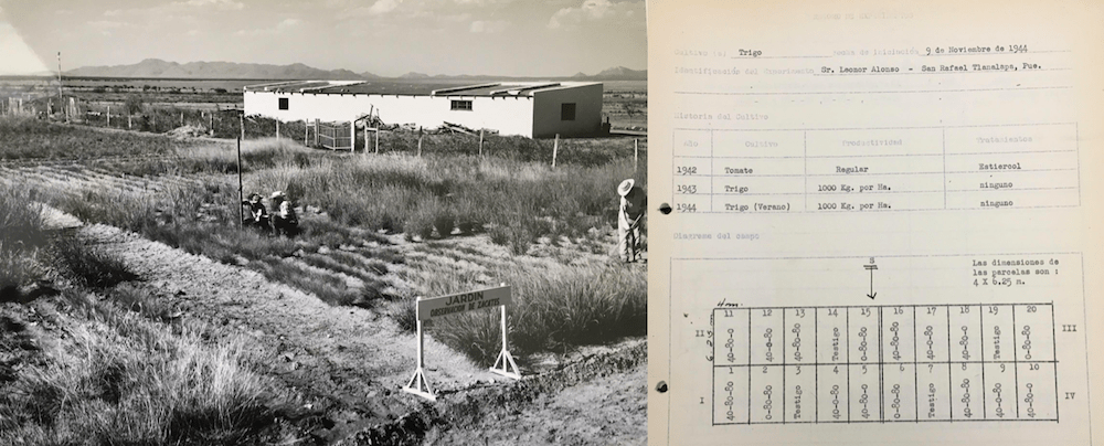 Two images showing the layout of a field at Chapingo and its design.