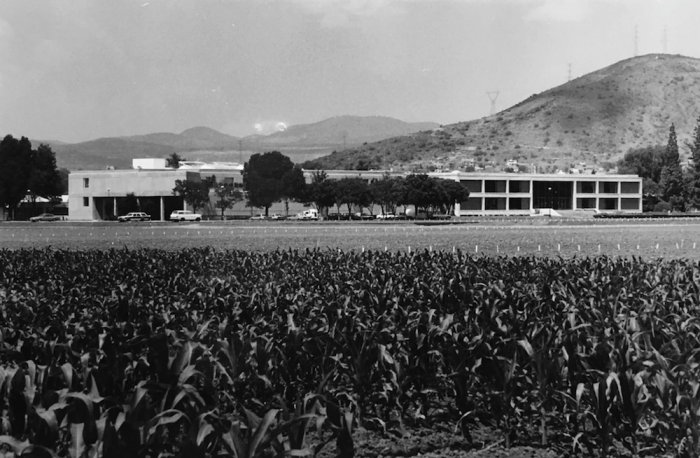 Buildings seen from a corn field at the Center for the Improvement of Maize and Wheat.