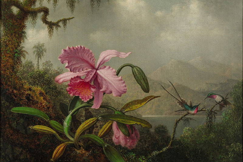 A single pink orchid bloom fills the foreground. Two green and pink hummingbirds hover nearby. The background is of a lush tropical landscape.