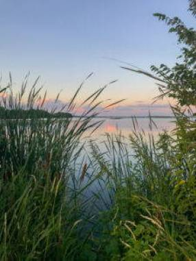 A view from the shoreline of a lake, looking through reeds out onto the water.
