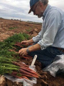 A man crouches in the dirt on what appears to be a farm field in front of a row of carrots tied in bundlings, holding two of the bundles.