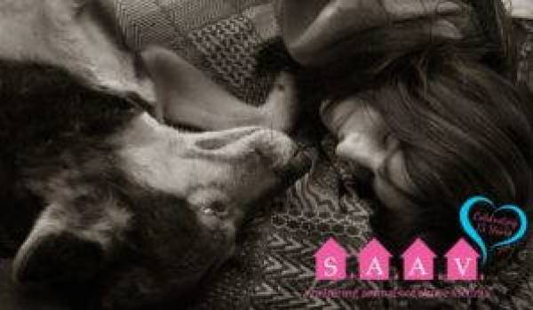 """A greyscale image of a woman's head and a dog's head, both facing down from the top of the the image, lying close together on a blanket with the letters S. A. A. V. each superimposed in white against pink icons of houses. Underneath the logo it reads """"Sheltering Animals of Abuse Victims"""" with the words """"Celebrating 15 years"""" in a blue heart above them."""