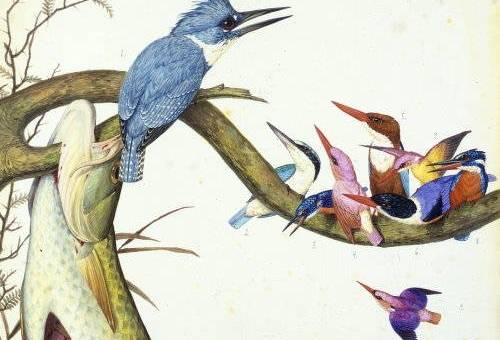 Greta LaFleur's book discusses the relationship between the natural world and sexuality. This painting depicts a fish skewered on a brach. The branch also holds a blue jay and many smaller purple, red, pink, blue, and yellow birds.