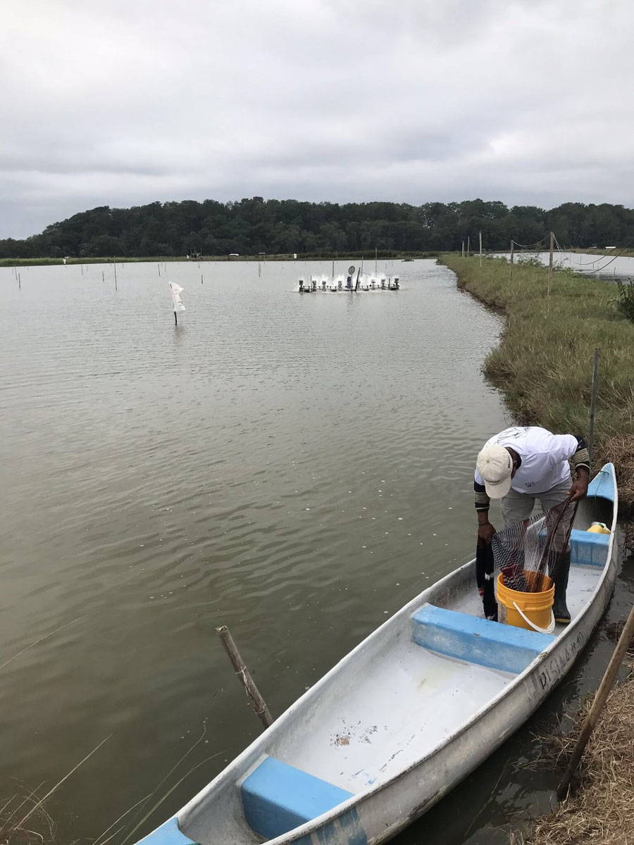 Person in canoe on aquaculture farm pond