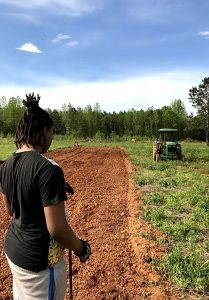 A person stands in a furrow of a field on a sunny day at Sankofa Farms