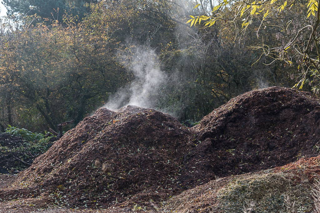 A steaming pile of compost on a sunny fall day