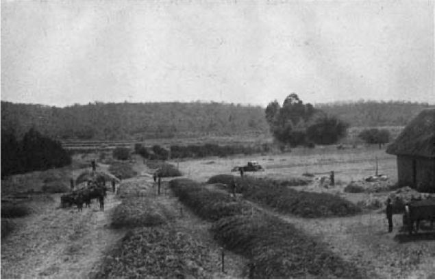 A black and white photograph of a field with laborers and vehicles visible
