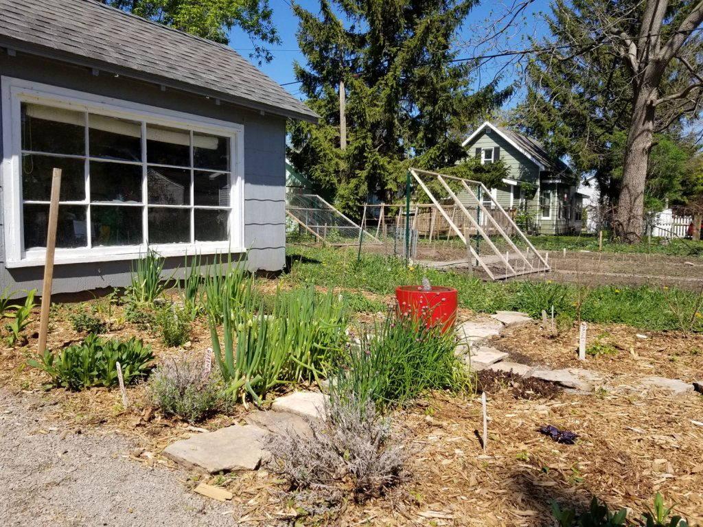 Rows of plants in a quarantine garden in Oshkosh, Wisconsin