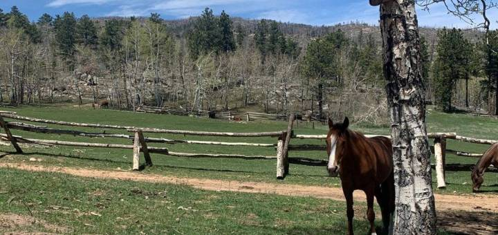 Two horses and a fence