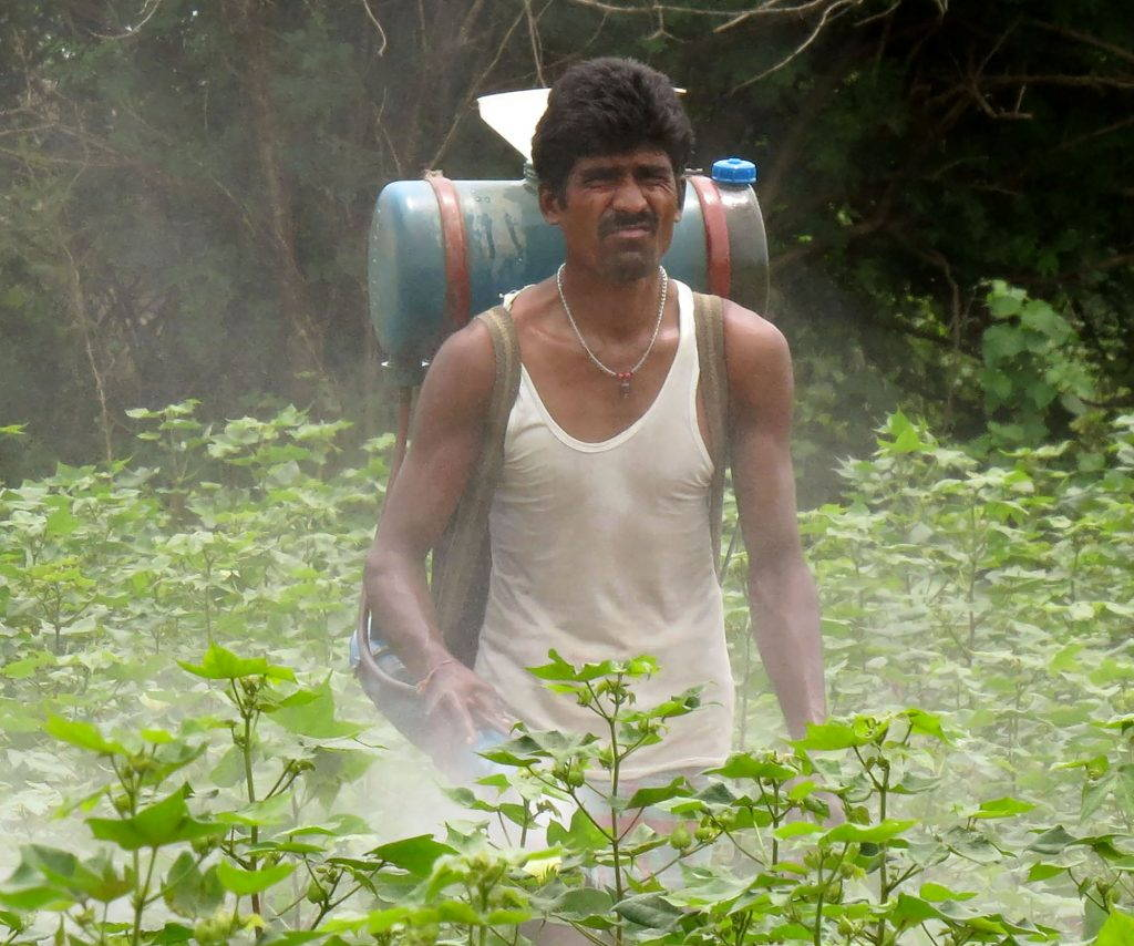 Farmer spraying pesticides on cotton plants