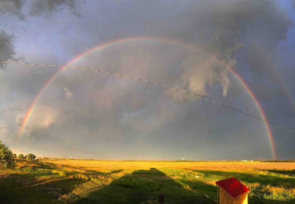 Rainbow against a dark sky over a wheat field
