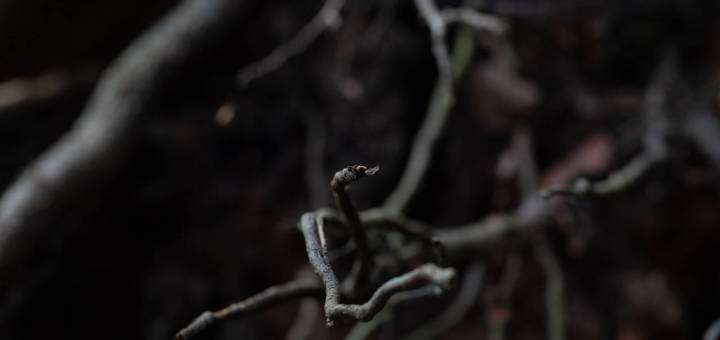 Close-up photograph of slender plant roots