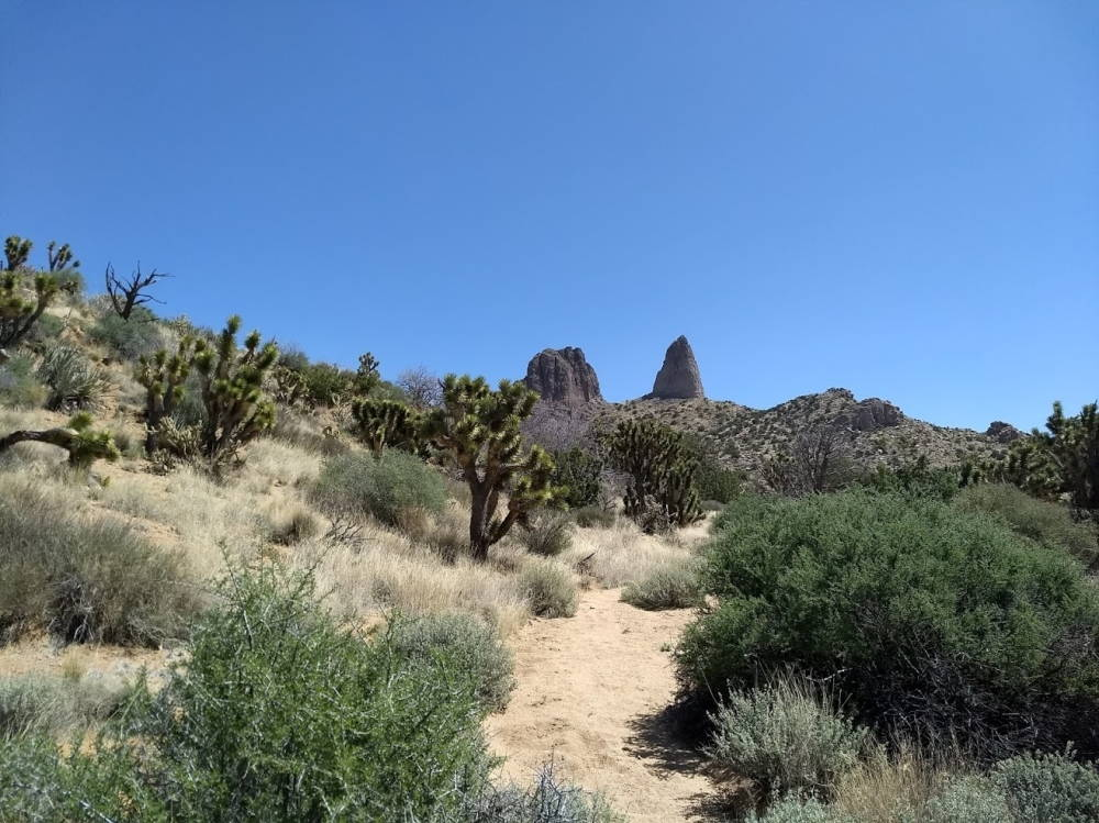 Rock peaks of an East Mojave mountain range are surrounded by desert plants, including Joshua trees