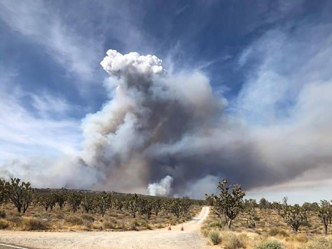 Smoke cloud covers sky over East Mojave landscape with many Joshua trees