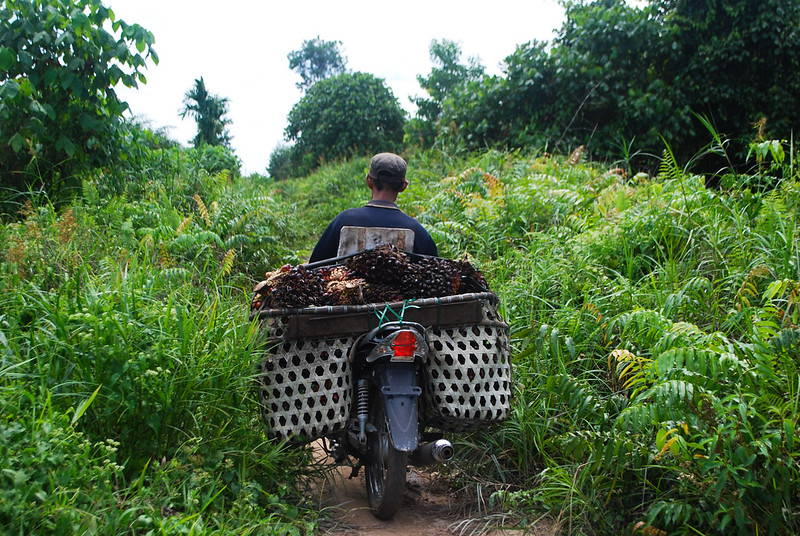 Person drive motorcycle carrying palm through palm fronds