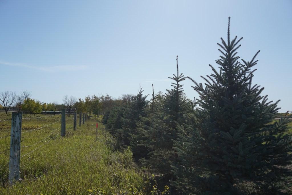 Dozens of new trees