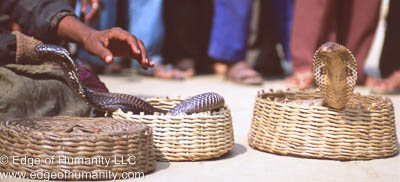 India, Snakes in a basket.