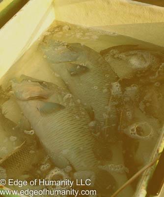 Fish in a tub - Hong Kong Fish Market.