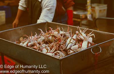 Crabs at the Hong Kong Fish Market.