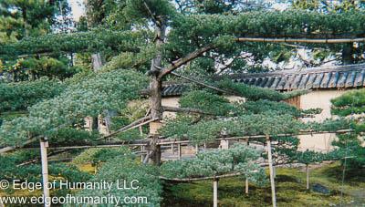 Japanese Gardens Kyoto Japan Edge Of Humanity Magazine