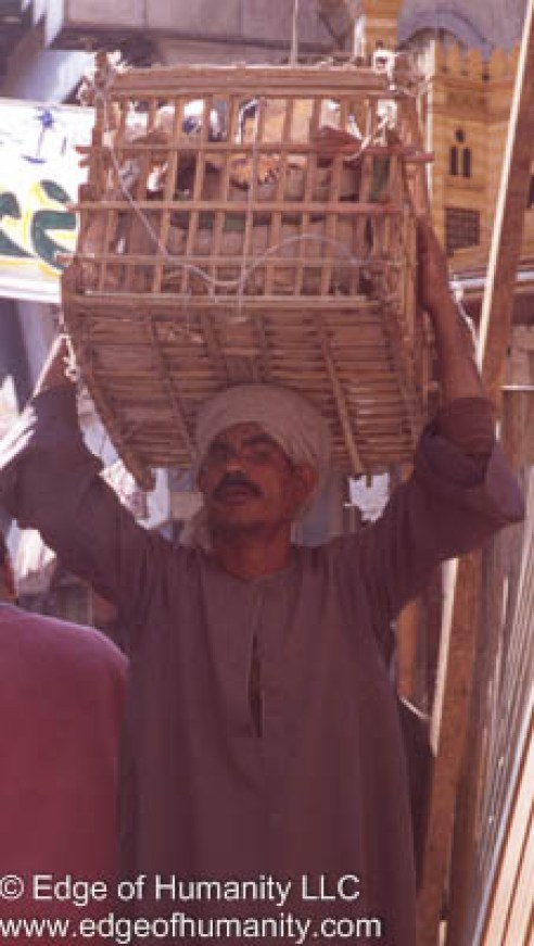Man carrying a large basket on his head - Egypt.