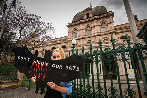 Don't Shoot Our Bats: A demonstrator takes stand outside the gates of the Queensland Parliament Building as part of a rally organised against the legalized slaughter of Flying-Foxes. On National Threatened Species Day 2012, the Queensland Government announced intentions to legalize the shooting of Flying-foxes.