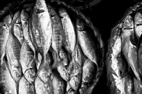 Fish Cambodia