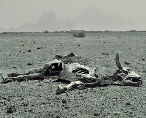 Drought Taka Mountains Kassala Sudan