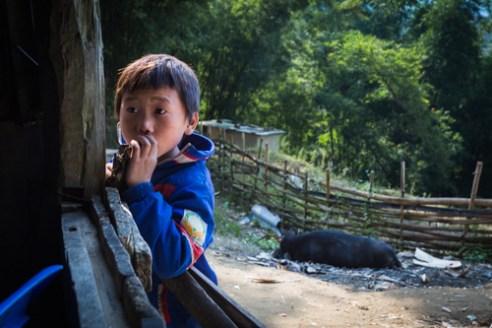 Peek a pig Sa Pa, Vietnam