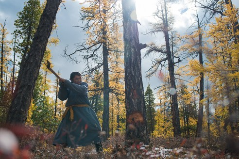THE LIFE IN ORTZ Lkhagvasuren Battur (59), a guide, chops down a tree for firewood to be used in a stove inside ortz, the teepee-like tents, used by the Tsaatan people, in East Taiga, Mongolia on September 17, 2015. The firewood burns so well that it heats up the ortz quickly but it also burns fast, requiring a constant supply of firewood.