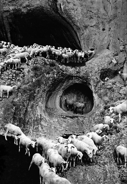 Sheep Portugal 1970