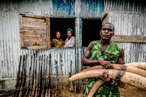 Central Africa is in the midst of an elephant poaching crisis. In order to combat the problem, the president of Gabon has recruited a whole new section of the army devoted to fighting back against wildlife crime. Here, Mba Ndong Marius holds seized Ivory tusks in front of a pile of confiscated weapons. Menkebe, Gabon.