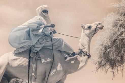 Tuareg camel rider