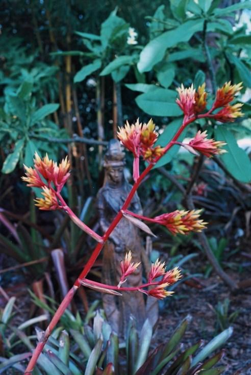 3'HIGH Bromeliad Aechmea
