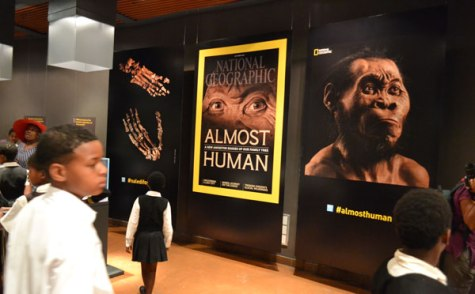 The homo naledi fossils were on display at the Cradle of Humankind between September and October this year.