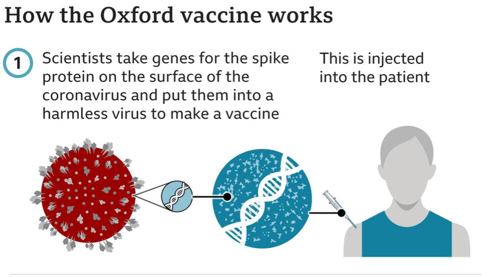 Covid-19: Oxford-AstraZeneca vaccine approved for use in UK - BBC News