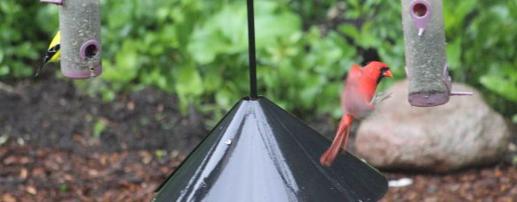 birdfeeders in the rain