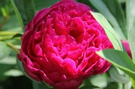 bloom2