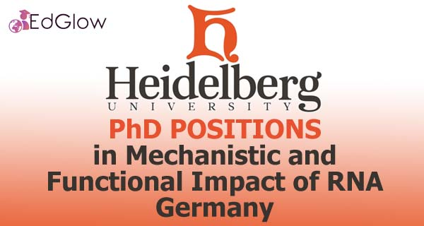 PhD in Mechanistic and Functional Impact of RNA, Germany