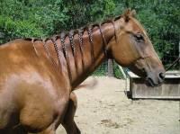 Braiding horse hair
