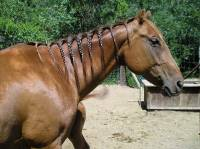 Braiding horse hair | edGod_aNiMaL