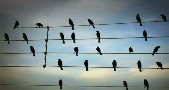 z BIRDS VIDEO